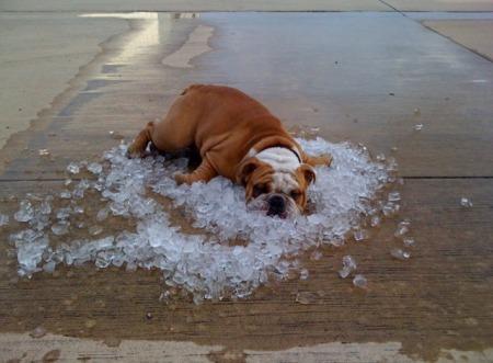 Proteggere gli animali dal caldo